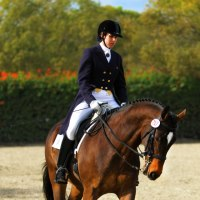 FEI Dressage Level Horse Trainer